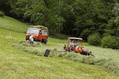 Fienagione degli agricoltori svizzeri in prato alpino, la Svizzera Fotografia Stock