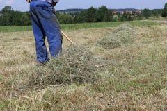 fienagione dell'agricoltore Fotografia Stock