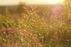 Fienarola dei prati nei raggi caldi del tramonto con i manufatti luminosi Il concetto della natura, ECO, vita rurale Fotografia Stock