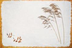 Fienarola dei prati secca sulla sabbia fotografia stock libera da diritti
