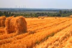 Fieno, campo dorato, raccolto Immagini Stock
