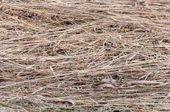 Fieno dell'erba asciutta di struttura Fotografie Stock