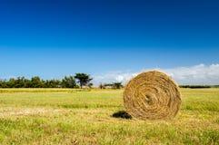 Fieno della balla nel paesaggio di agricoltura Fotografie Stock