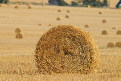Fieno di torsione sul campo dell'azienda agricola Immagini Stock