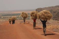 Fieno di trasporto dell'uomo in Africa Fotografia Stock