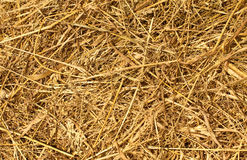 Fieno o Straw Texture dorato asciutto Fotografia Stock