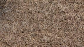 Fieno/Straw Thatched Roof Texture Fotografie Stock Libere da Diritti