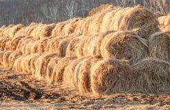 Fieno su un'azienda agricola Fotografia Stock Libera da Diritti