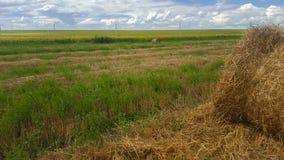 Fieno sul campo Estensioni senza fine di terreno agricolo immagine stock