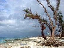 fientliga trees för strand Fotografering för Bildbyråer