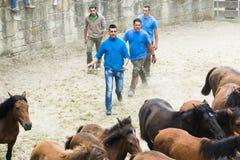 Fiera del cavallo Immagini Stock Libere da Diritti