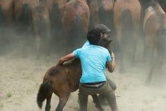 Fiera del cavallo Immagine Stock Libera da Diritti
