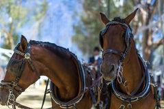 Fiera di aprile di Utrera nella decorazione e nei cavalli di Siviglia Immagine Stock