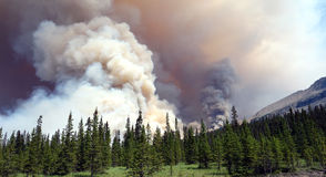 A fierce forest fire blazing at banff park. Smoke billowing from a huge blaze as seen in alberta stock photography