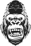 Fierce gorilla head. Vector illustration, ferocious gorilla head on a white background Stock Images
