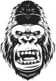 Fierce gorilla head Stock Images