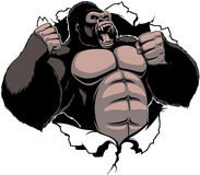 The fierce gorilla shouts. Vector illustration, ferocious gorilla breaks the wall with his fists Royalty Free Stock Photo