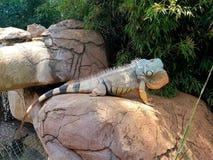 Fierce Iguana photographed in Bloemfontein, South Africa