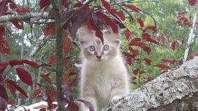 Fierce kitty. Cute pet photos stock images