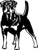 Fierce mix breed dog. Black and white clipart illustration of a standing and alert mix breed dog Stock Photography