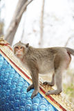 Fierce monkey gesture Stock Photography