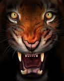 Fierce tiger. Wild tiger emerging from the dark shadows Royalty Free Stock Photos