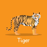 Fierce tiger in Asia illustration desian on orange background.ve. Fierce tiger in Asia illustration desian on orange background Royalty Free Stock Images
