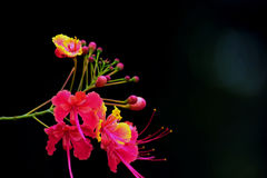 Fierté de Barbadose Photographie stock