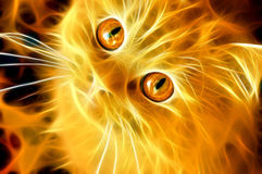 Fiery cat Royalty Free Stock Photography