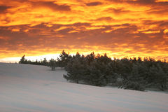 Fiery decline. In mountains over snow-covered coniferous wood royalty free stock images