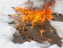 Fiery flame on the white snow in winter Royalty Free Stock Photography