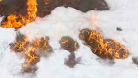 Fiery flame on the white snow in winter Royalty Free Stock Image