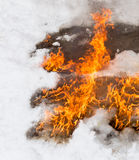 Fiery flame on the white snow in winter Royalty Free Stock Photos