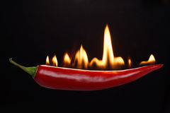 Fiery hot pepper. Red hot chili pepper Stock Images