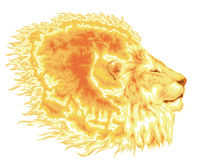 Fiery mane of lion Stock Photo