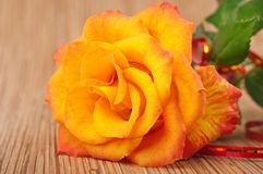 Fiery rose Royalty Free Stock Photography