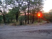 FIERY SETTING SUN SITTING LOW IN THE TREELINE OF THE AFRICAN BUSH Royalty Free Stock Image