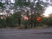 FIERY SUN GOING DOWN IN THE AFRICAN BUSH Stock Images