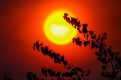 Fiery sun Royalty Free Stock Photos