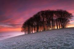 Fiery Sunrise over Misty Woods Stock Photo