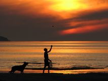 Fiery sunset. Man and his dog at the beach during sunset Royalty Free Stock Images