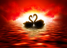 Fiery sunset. Black swans on a background of fiery sunset Royalty Free Stock Photos