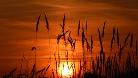 Fiery sunset. Golden Autumn, fascinates ... royalty free stock images