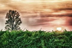 Sunset over the vineyards. Fiery sunset over the vineyards Stock Images