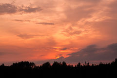 Fiery sunset and silhouette forest Royalty Free Stock Image