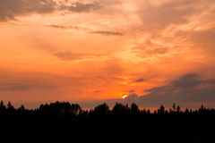 Fiery sunset and silhouette forest Stock Images