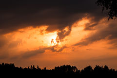 Fiery sunset and silhouette forest Royalty Free Stock Photo