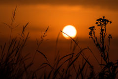 Fiery sunset with silhouette of meadow grass Stock Photos