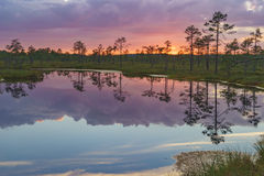 Fiery sunset with vivid clouds over Suru Suursoo bog Royalty Free Stock Photos
