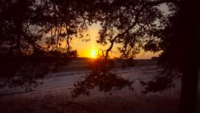 Fiery sunset in winter forest, sun illuminates branches of spruce, a beautiful winter landscape, snow covered field stock footage